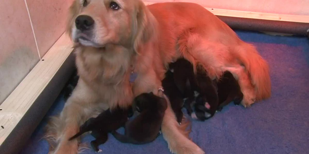 Fur-tastic Ending: Dog adopts abandoned pups