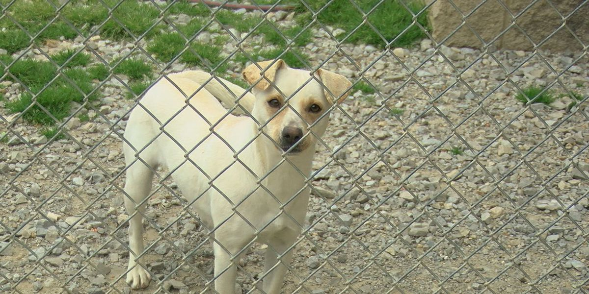 Pet vaccination bill to possibly impact Jonesboro