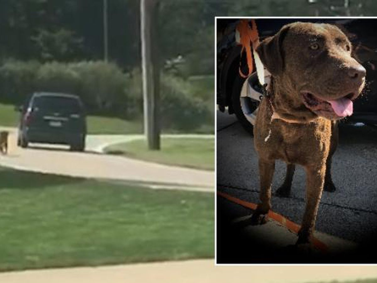 WATCH: Dog chases after van following possible abandonment