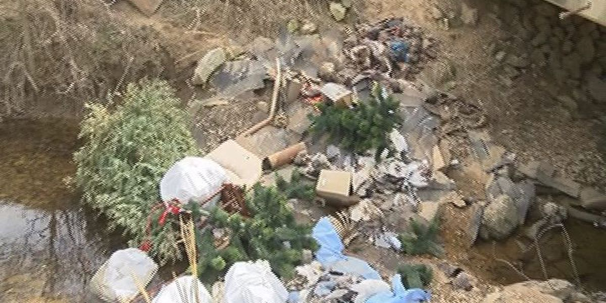 Tip leads sheriff deputy to dumping site filled with skinned animal carcasses