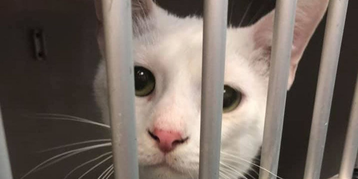 NEAHS reopens cat room, offers special adoption rate