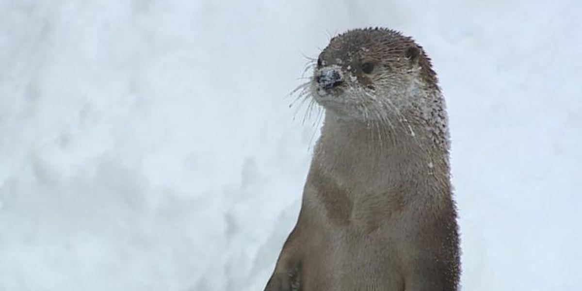 Zoo animals embrace winter blast