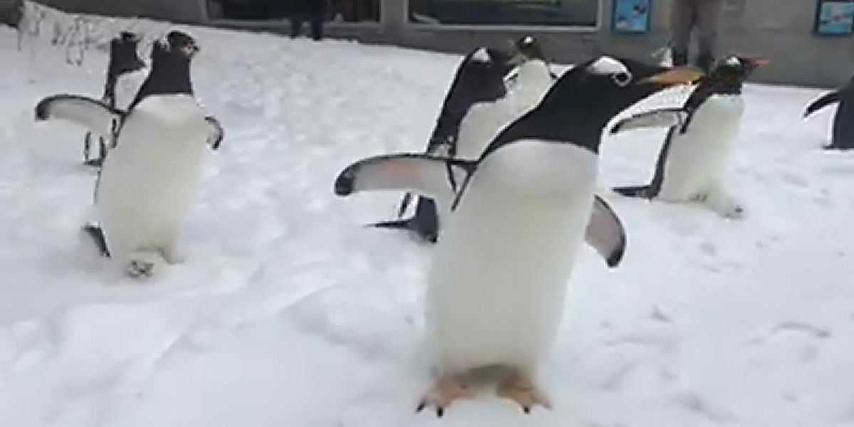 Penguin snow day
