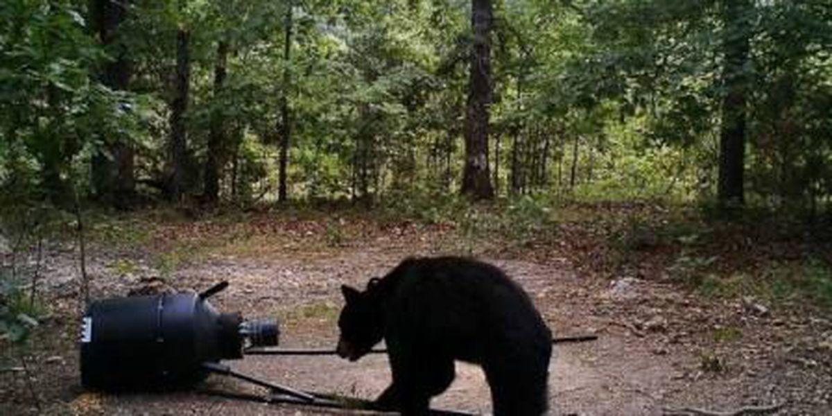 Bear caught on camera