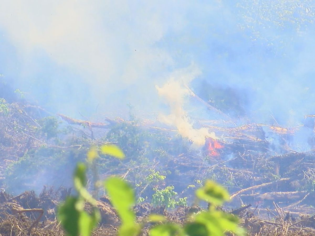 Jonesboro residents have concerns about trees burning