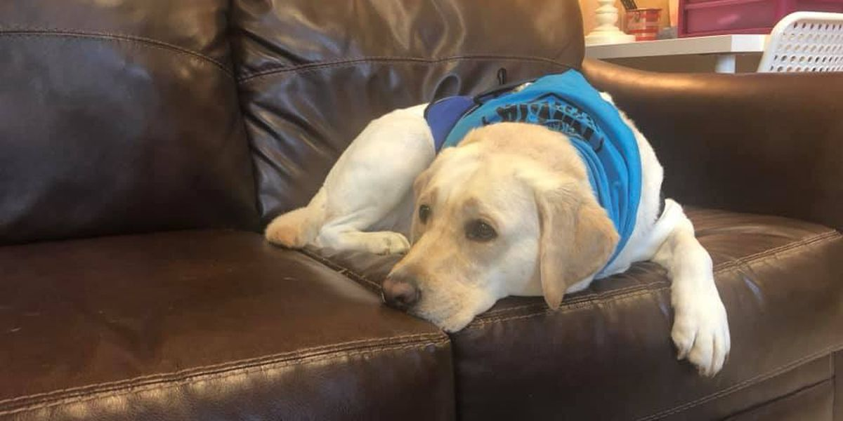 First day of school in the books for new therapy dog