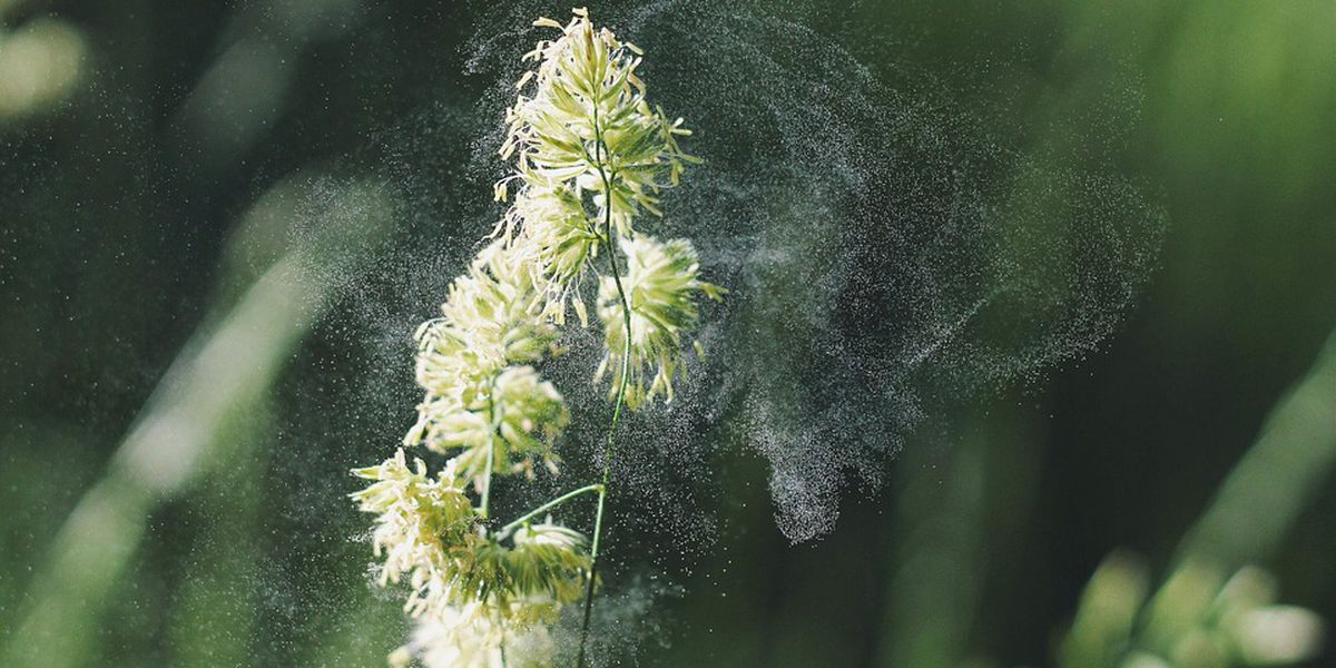 Fall allergies in full force, find new relief solutions