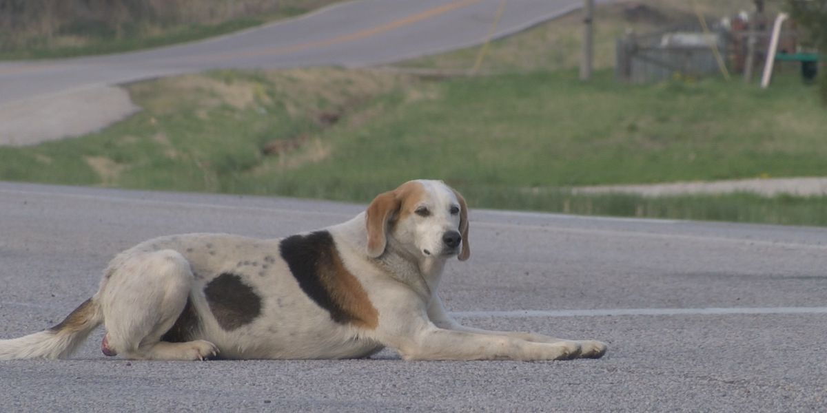 Panhandling hound makes name for himself in Ironton, Mo.