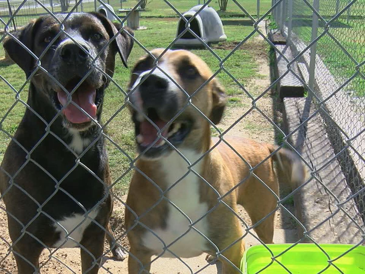 Animal abandonment puts burden on shelter, animals as well