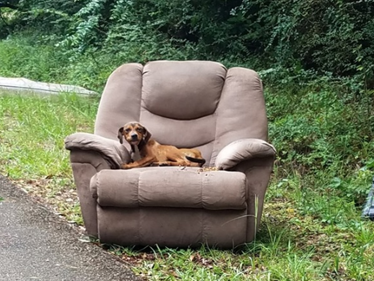 Puppy found dumped on side of Mississippi road in arm chair