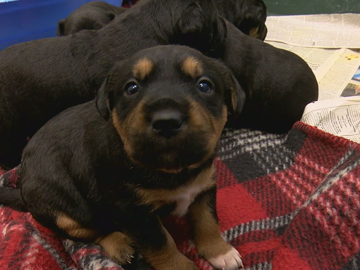 NEAHS discusses gifting puppies and kittens before the holiday season