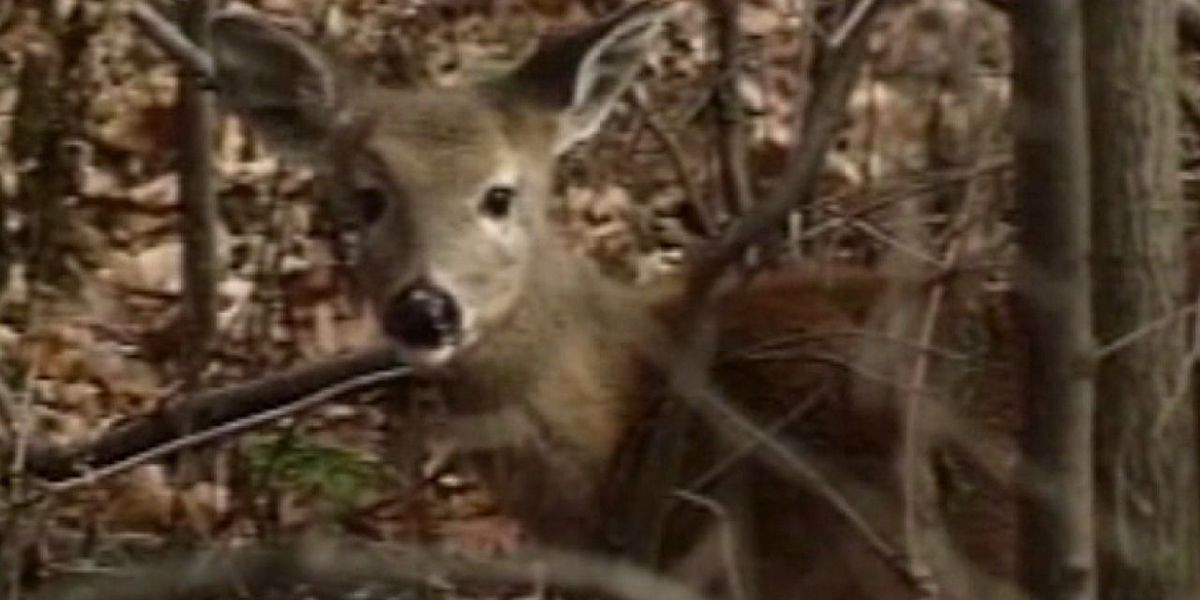 Missouri poacher ordered to repeatedly watch 'Bambi'