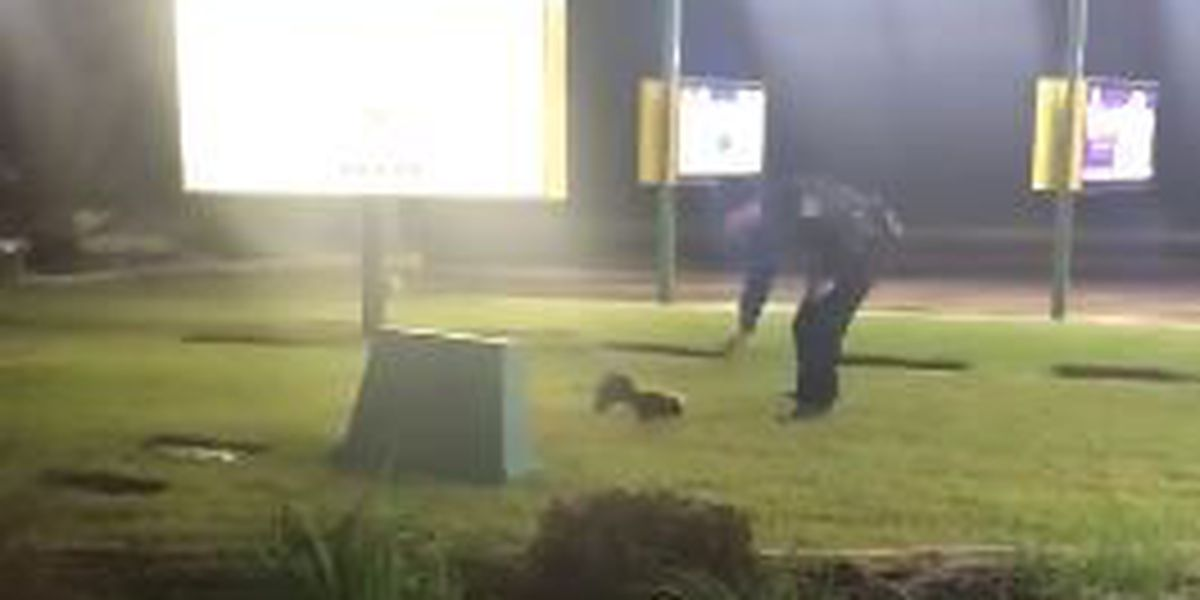 VIDEO: Deputy helps skunk out of tight spot