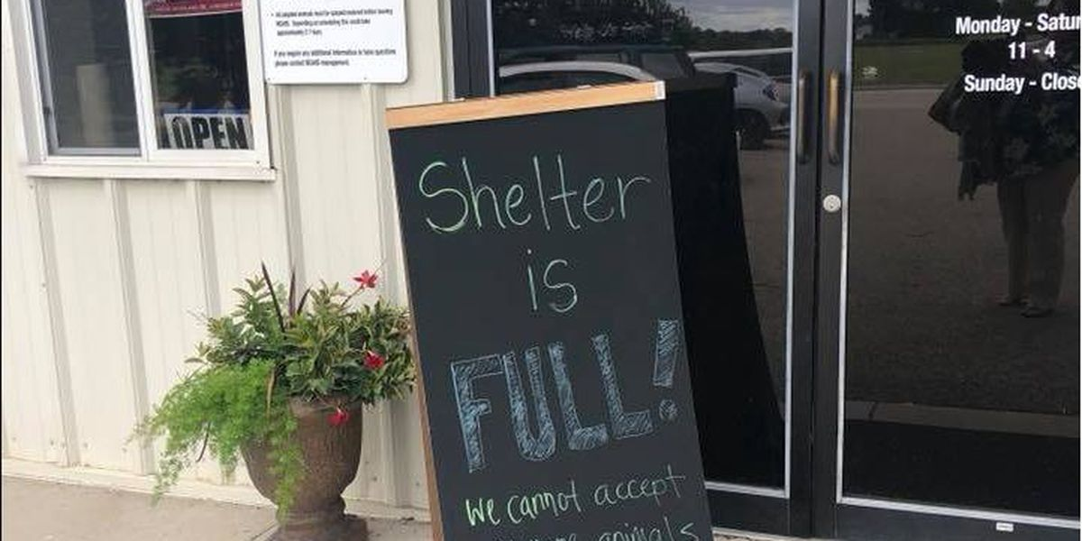 "NEA Humane Society ""beyond capacity,"" not accepting animals"
