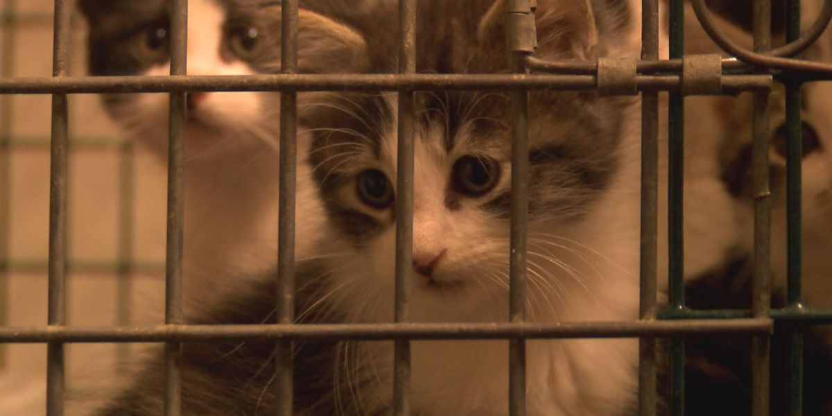 Animal shelter looking to expand after one month of business