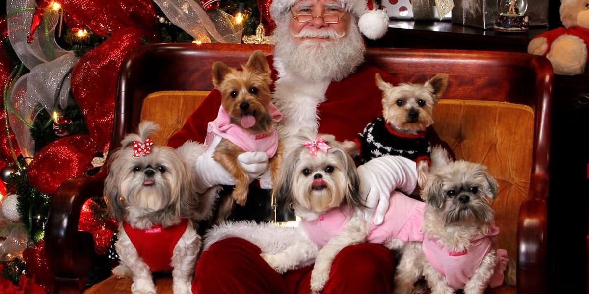 Holiday pet photos to benefit NEAHS