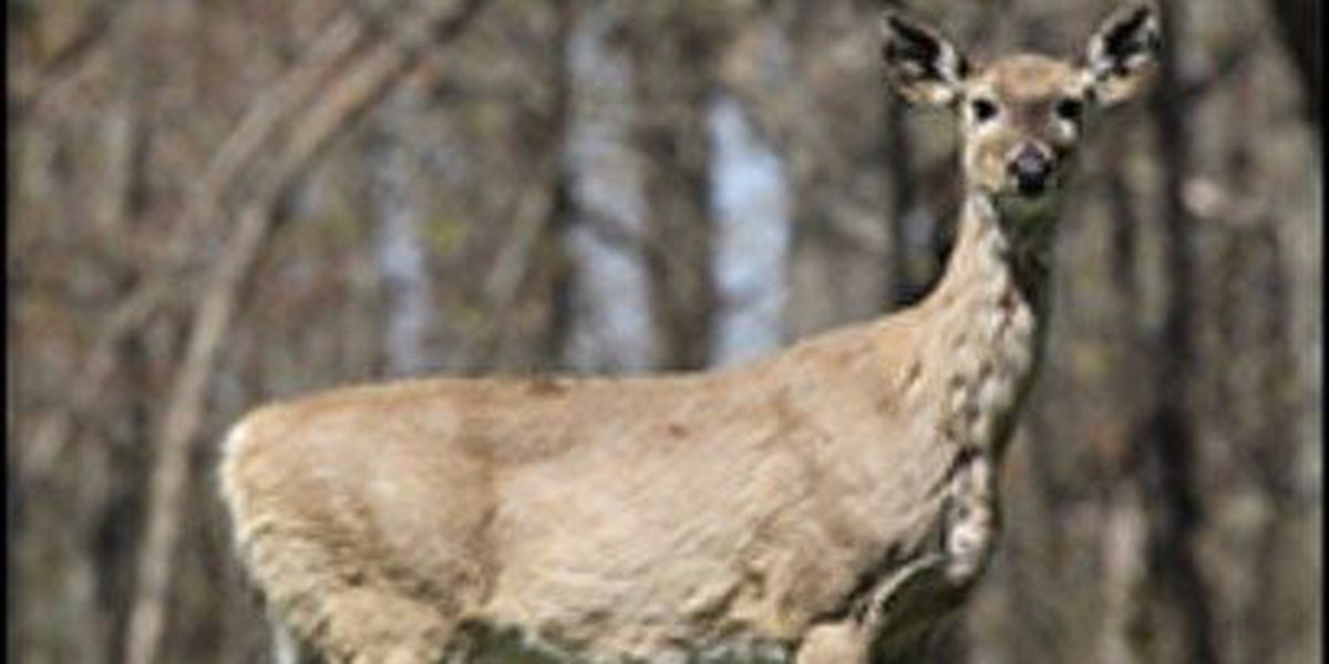 AGFC receives notice of 23 additional positive CWD results