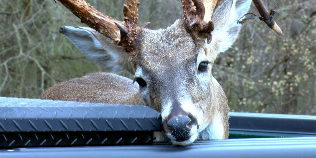 Missouri lawmakers bring back poaching restitution bill