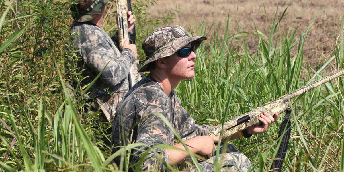 Public dove fields available for hunters on WMAs