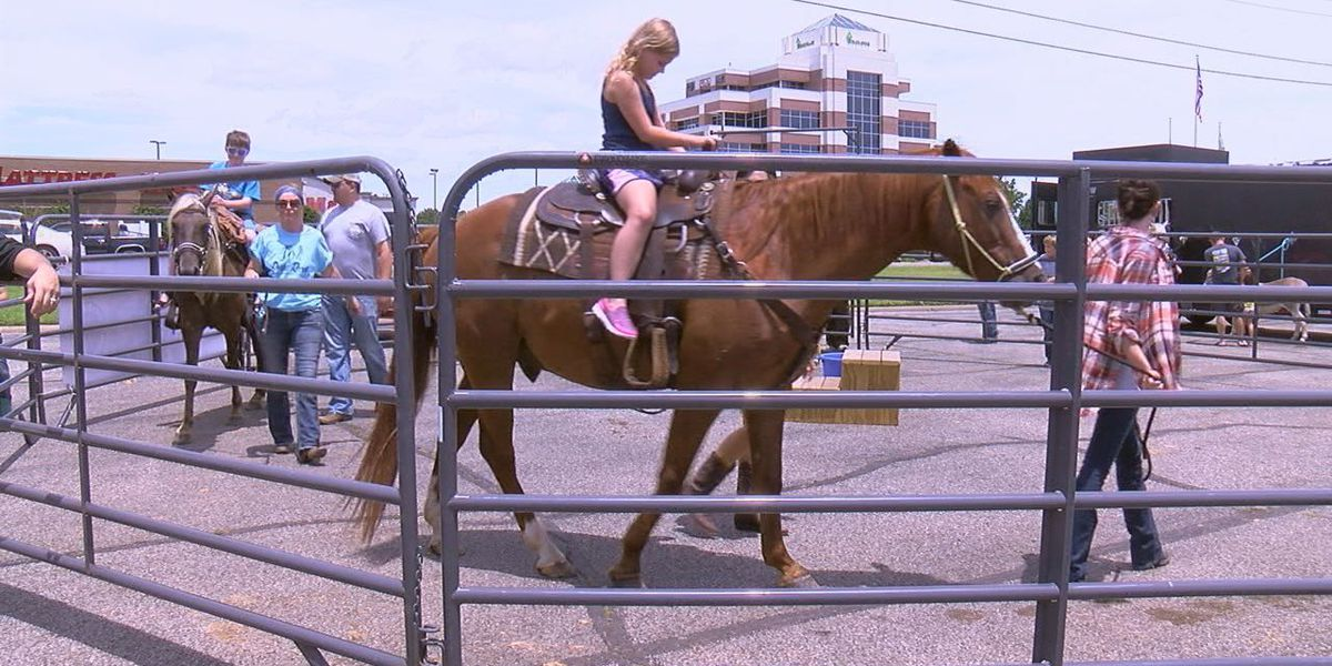 Nonprofit demonstrates work of therapy horses