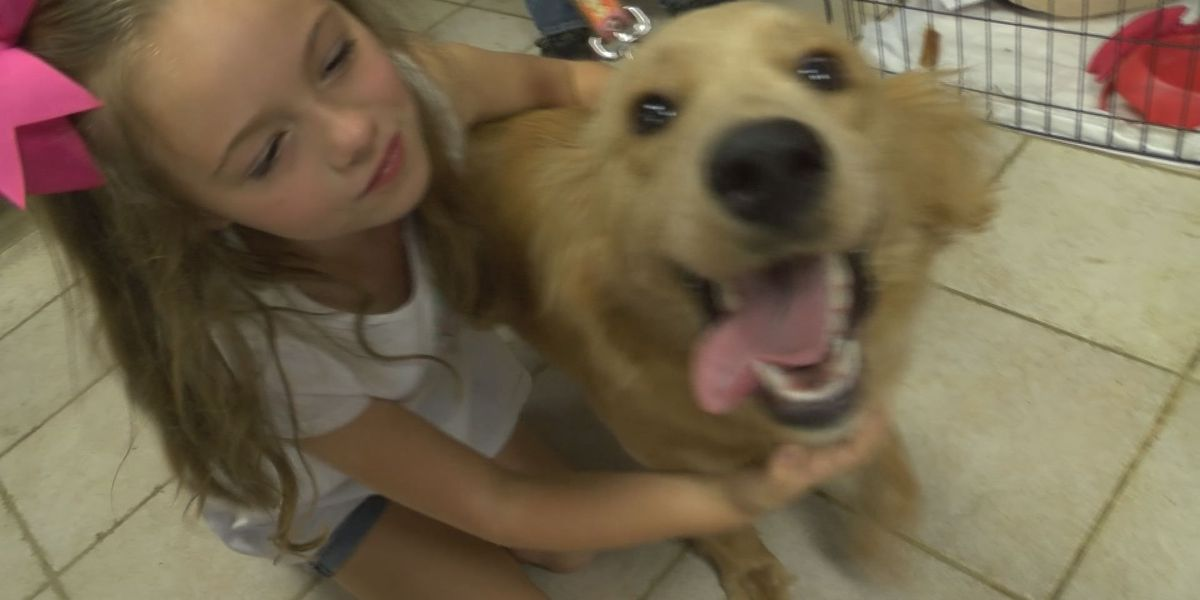 Adoption event held by Arkansas Angels 4 Animals
