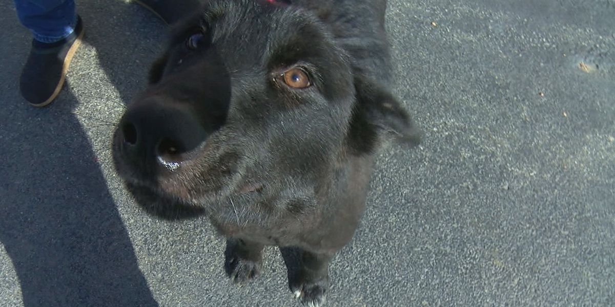 Dog survives coyote attack; NEAHS warns of threat