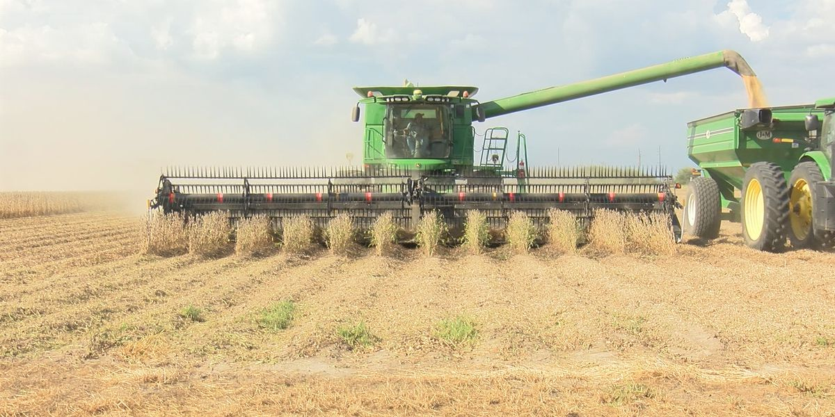 "Heartland farmers ""cautiously optimistic"" about new China trade agreement"