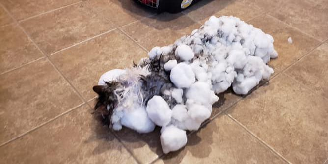 'It's just amazing' says veterinarian after 'frozen cat' makes full recovery