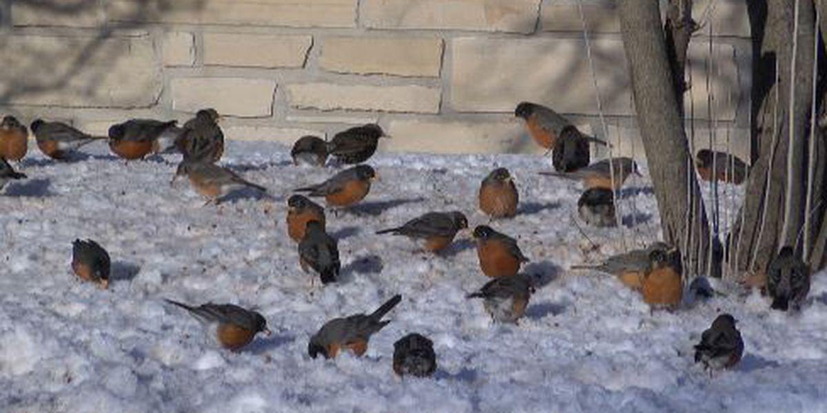 Birds seeking food, shelter during winter weather