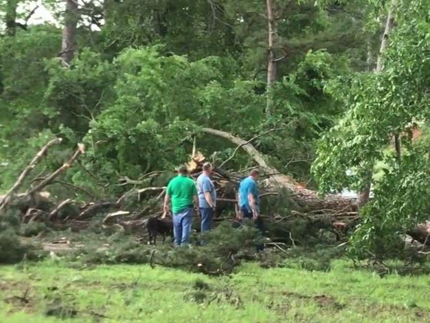 Strong storms in US South kill at least 8 and injure dozens