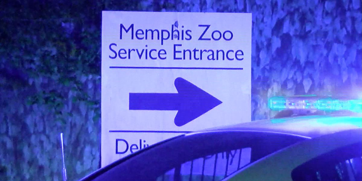 Robbery suspect captured after breaking into Memphis Zoo in attempt to escape police