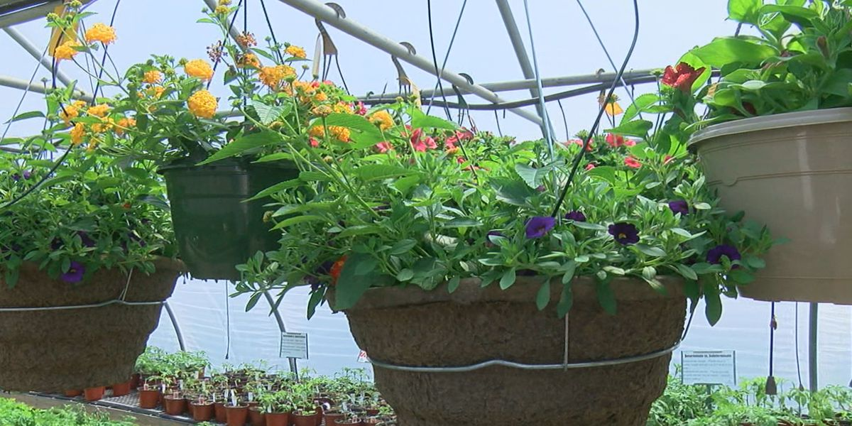 Frost brings potential problems for gardeners