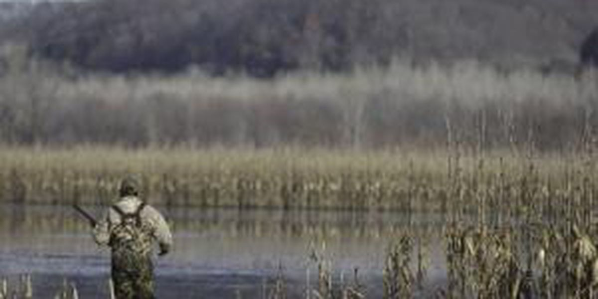 MDC waterfowl hunts going to COVID level red starting Nov. 25