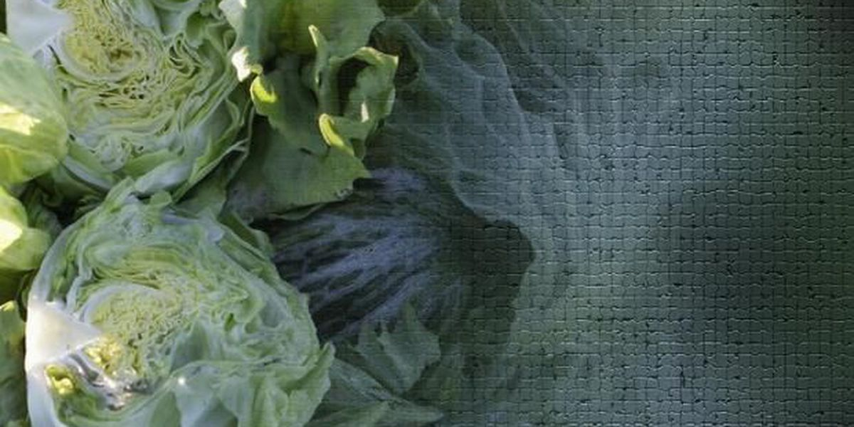 Romaine lettuce outbreak tied to contaminated canal water