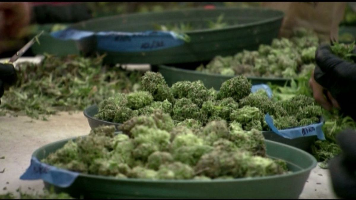 Little Rock school leaders delay vote on marijuana policy