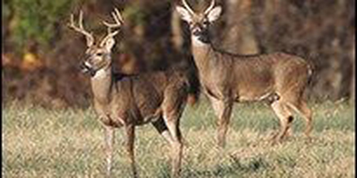 AGFC recognized for deer management