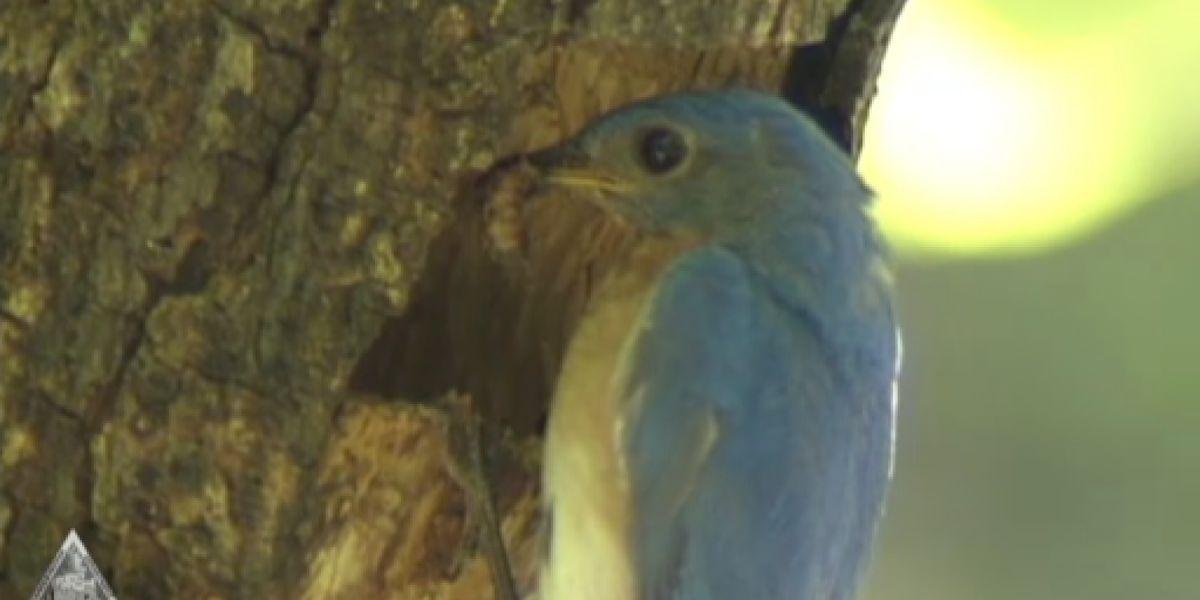Wintering birds decrease after winter weather