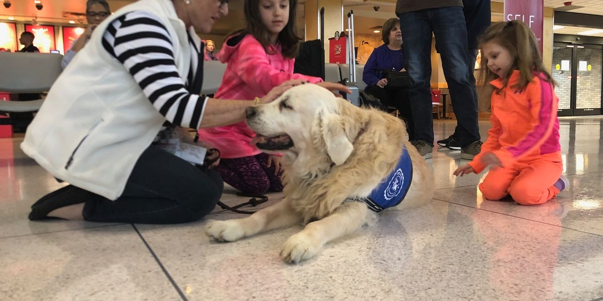Therapy dogs provide comfort to holiday travelers at Memphis airport