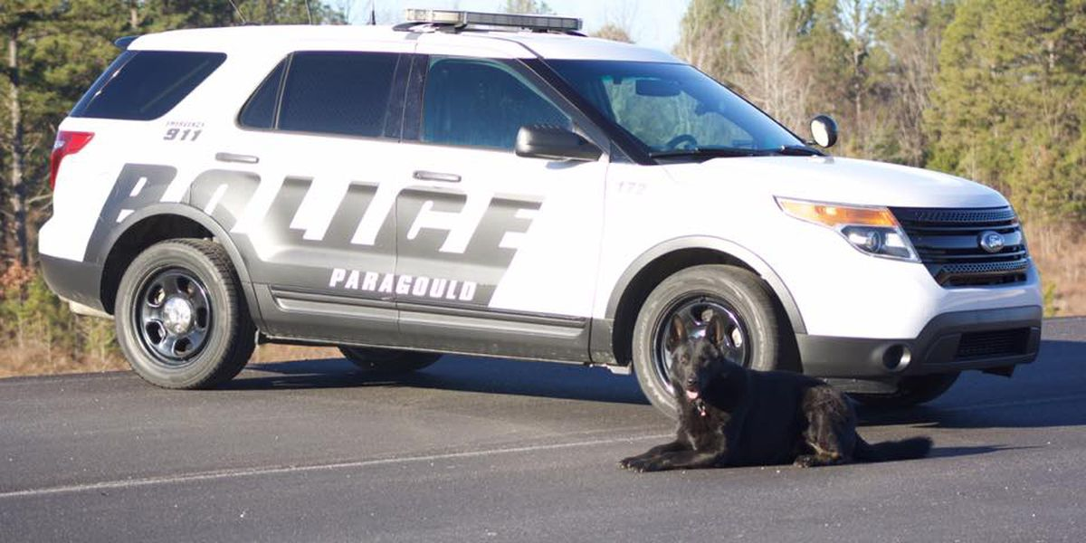 Four legged officer gets extra protection