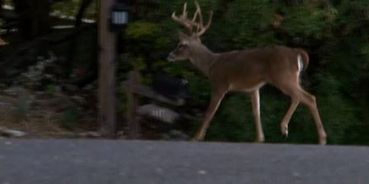 Missouri Department of Conservation gives deer hunting safety tips