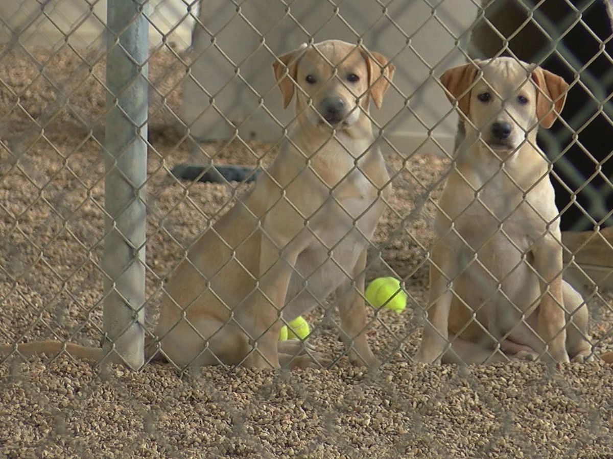 Jonesboro shelter needs foster parents for their puppies and kittens