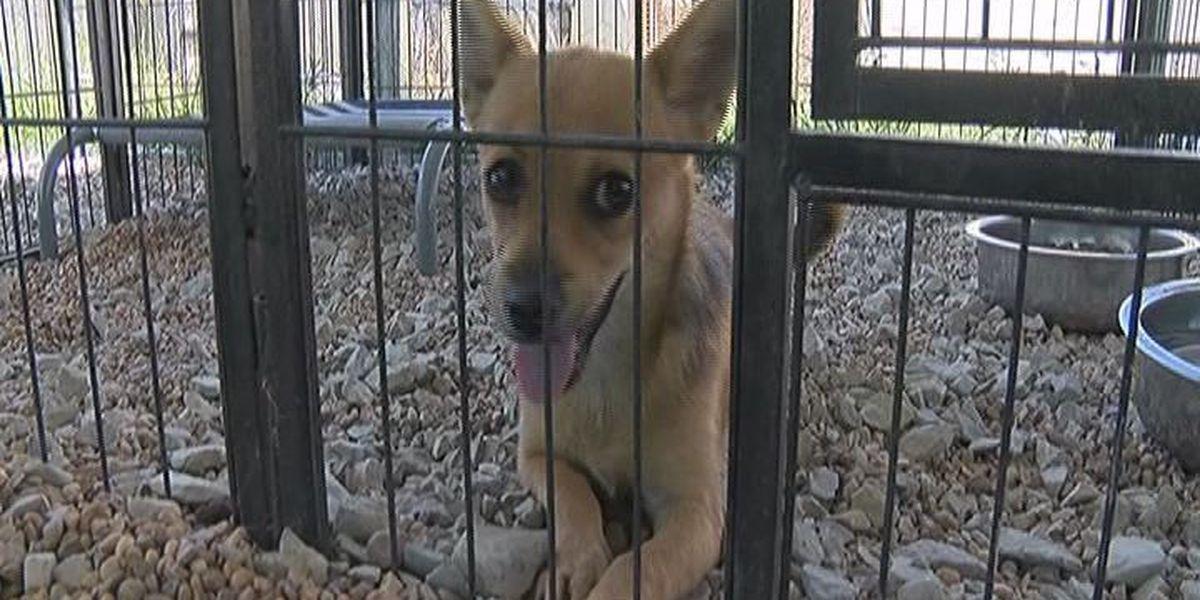 Jonesboro Animal Control lowers adoption price for National Dog Day