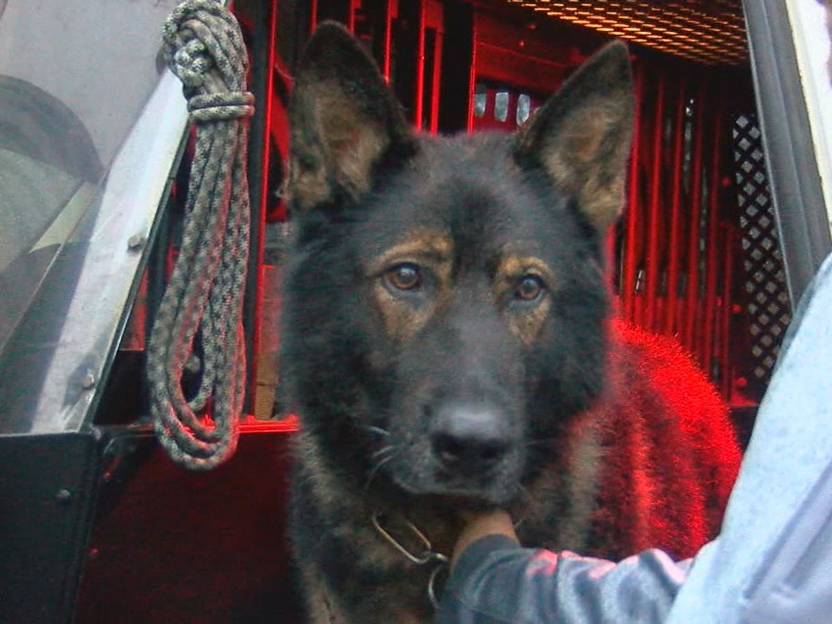 K9 officer released from veterinarian's office