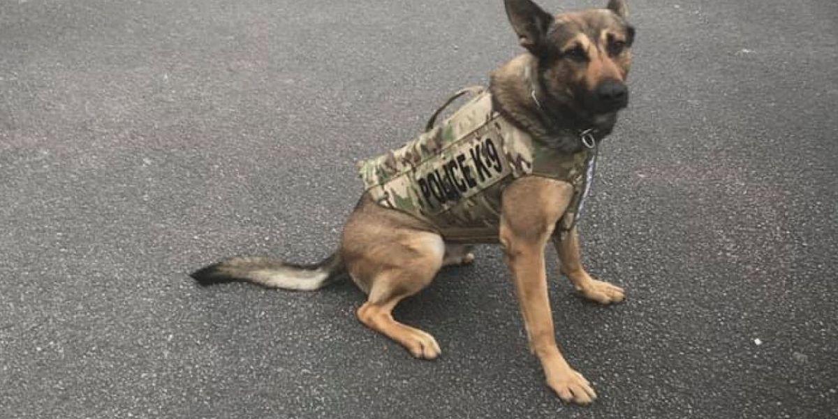 Trumann K9 officer safer but 'not so happy'