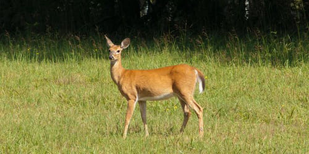 Seven new cases of CWD found in Southeast Missouri
