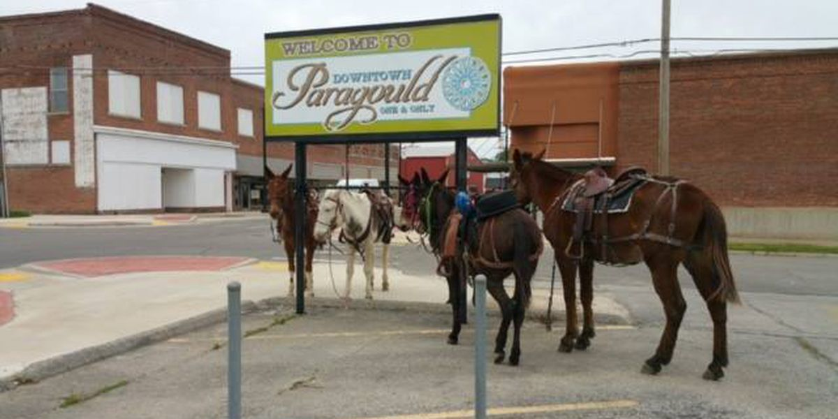 Mules leave something behind on downtown sidewalks