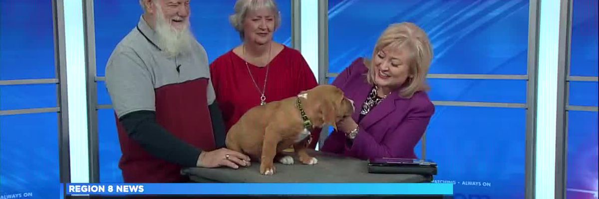 Midday Guest - 11/16/18 - 'John' needs a home