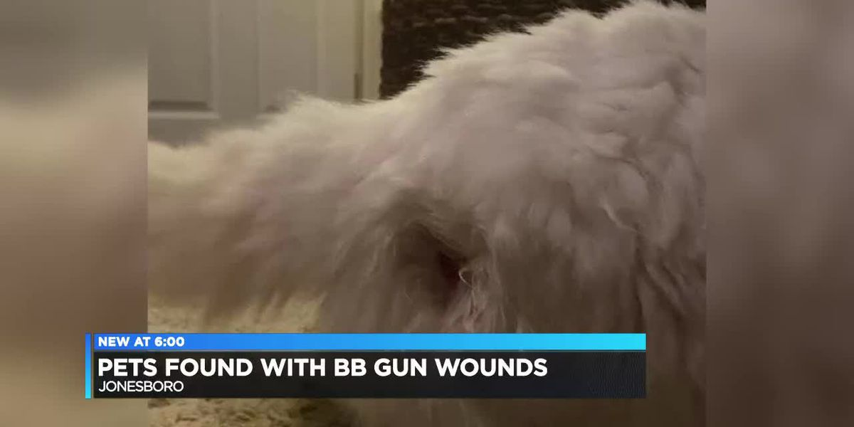 Neighborhood pets shot with BB gun