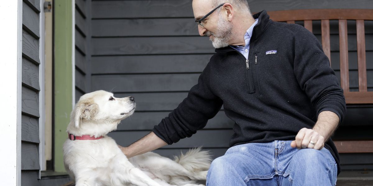 Scientists need 10,000 pets for largest-ever dog study of its kind