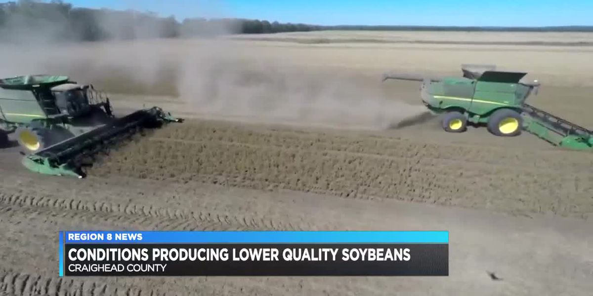 New weather conditions have soybean farmers optimistic